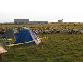 Schafe nach dem Sturm
