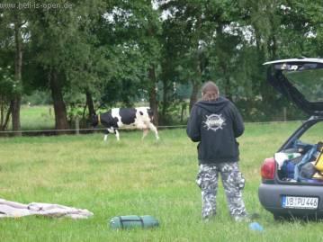 Kühe als Zeltnachbar
